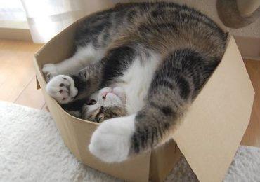 Совместим полезное с приятным: домик и когтеточка для котиков в одной конструкции