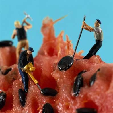 Фотосессия с маленькими газонокосильщиками фруктов