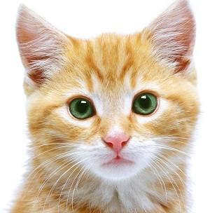 Уход за когтями кошек - когтеточки