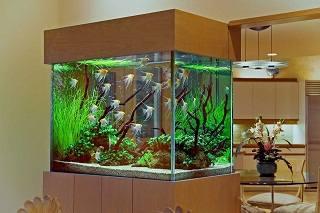 Содержание и уход за пецилиевыми рыбками. Рыбки гуппи с кем уживаются?