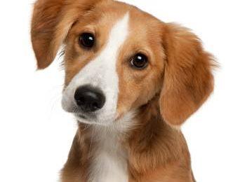 Как правильно использовать лежанку или домик для собаки