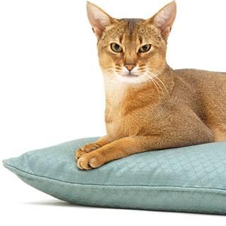 Лучшие породы кошек для дома и детей. Фото пород кошек.