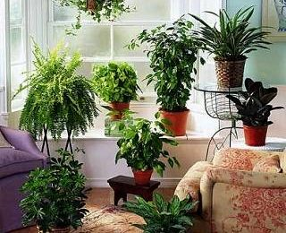 Как комнатные растения продлевают жизнь? Удивительные факты флористики
