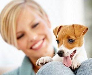 Домики для собак : все тонкости правильного выбора