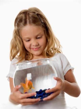Нюансы правильного освещение аквариума